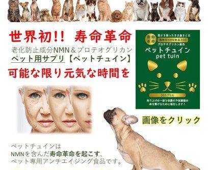 発見 長寿 ペット 愛犬  ペットと長生き ペットチュイン